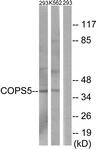 C11442-1 - COPS5