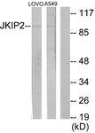 C11472-1 - JAKMIP2