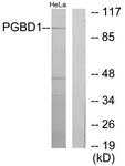 C11505-1 - PGBD1