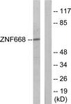 C11507-1 - ZNF668