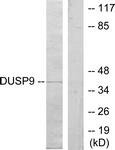 C11586-1 - DUSP9 / MKP4