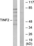 C11607-1 - TINF2 / TIN2