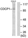 C11696-1 - CD318 / CDCP1