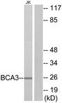 C11741-1 - BCA3