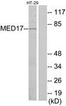 C11762-1 - MED17