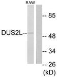 C11772-1 - DUS2L