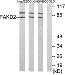 C11785-1 - FASTKD2