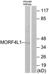 C11822-1 - MRG15
