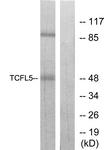 C11878-1 - TCFL5