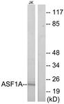 C11928-1 - ASF1A