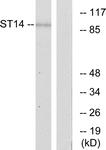 C11979-1 - ST14 / Matriptase