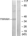 C12003-1 - 14-3-3 protein eta