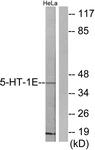 C12011-1 - Serotonin receptor 1E (HTR1E)