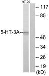 C12016-1 - Serotonin receptor 3A (HTR3A)