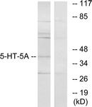 C12018-1 - Serotonin receptor 5A (HTR5A)