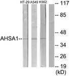 C12046-1 - AHA1 / AHSA1