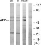 C12052-1 - API5 / MIG8