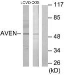 C12070-1 - AVEN