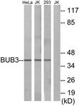 C12075-1 - BUB3