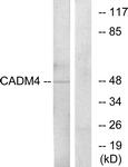 C12111-1 - CADM4