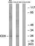 C12162-1 - CD9