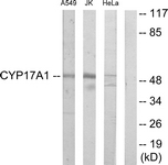 C12247-1 - CYP17A1
