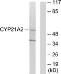 C12252-1 - CYP21A2