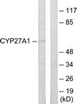 C12257-1 - CYP27A1