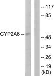C12258-1 - CYP2A6