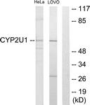 C12272-1 - CYP2U1
