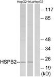 C12418-1 - HSPB2