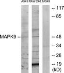 C12684-1 - MAPK9 / JNK2