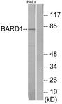 C13026-1 - BARD1