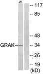 C13060-1 - Granzyme K (GZMK)
