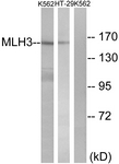 C13087-1 - MLH3