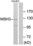 C13090-1 - MSH3