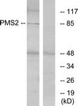 C13104-1 - PMS2