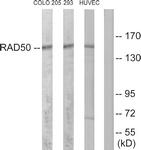 C13111-1 - RAD50