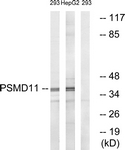 C14020-1 - PSMD11