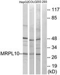 C14054-1 - MRPL10