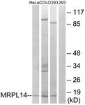 C14058-1 - MRPL14