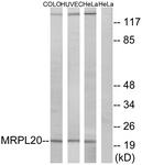 C14065-1 - MRPL20