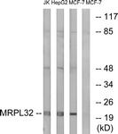 C14071-1 - MRPL32