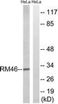 C14082-1 - MRPL46