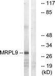 C14089-1 - MRPL9