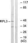 C14168-1 - RPL3