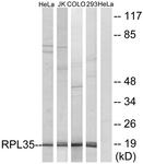 C14173-1 - RPL35