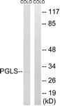 C14200-1 - PGLS / 6PGL