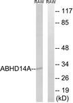 C14212-1 - ABHD14A