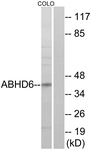 C14218-1 - ABHD6